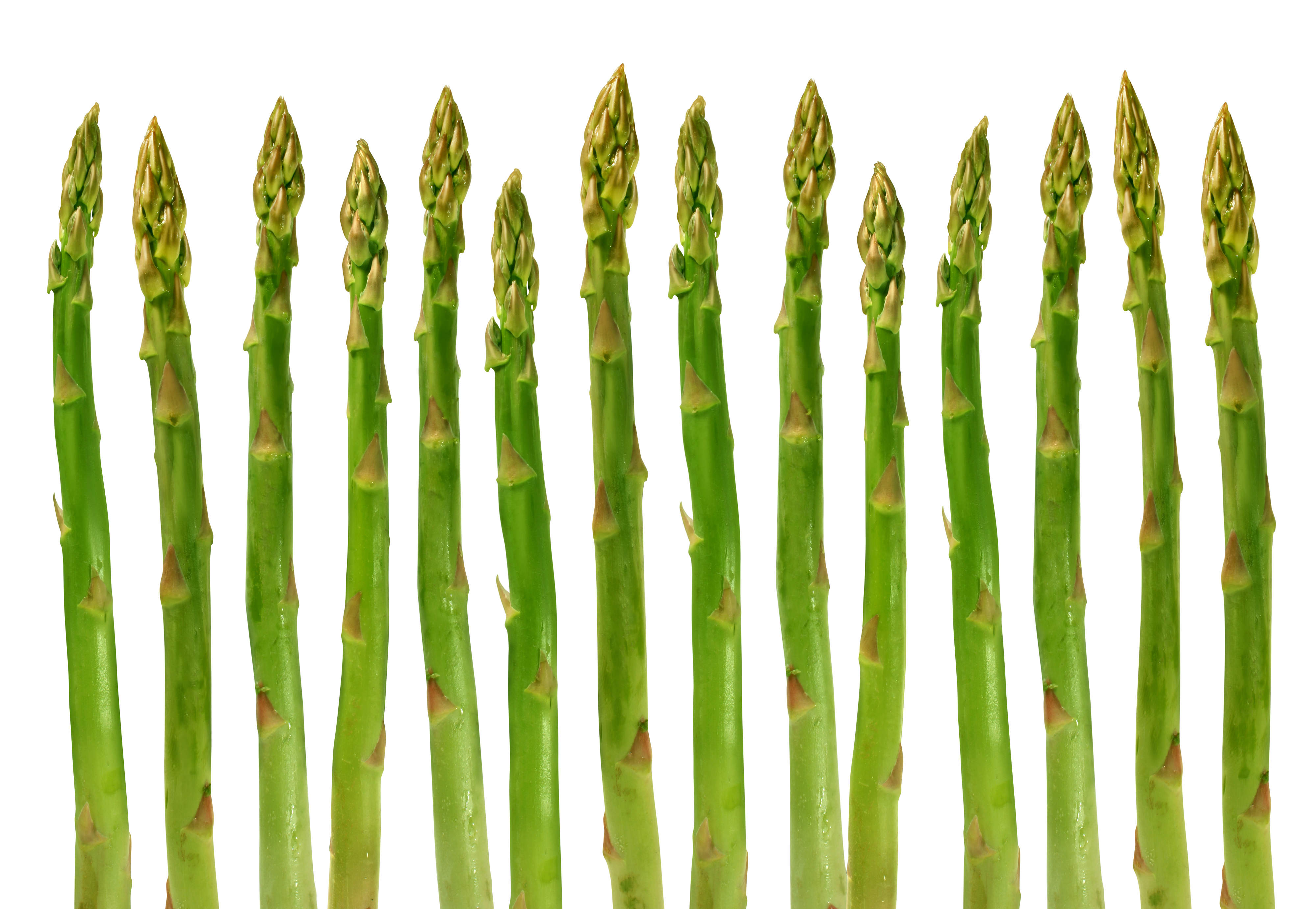 Asparagus group of green healthy vegetables organized in a row isolated on a white background as a food concept of health diet and living a natural fit well nourished life.